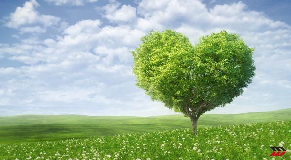 A Rimini, il green social economy summit