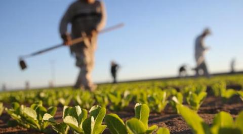 Lavoro nero in agricoltura. Cosa possiamo fare?