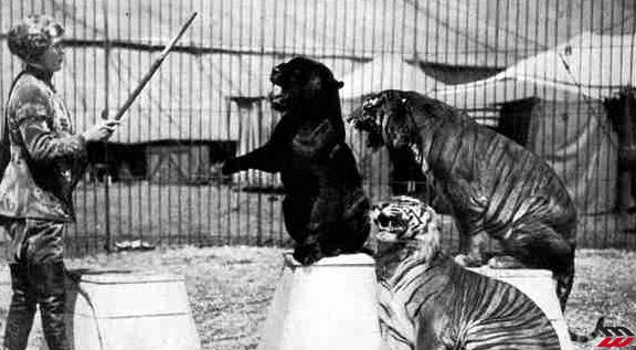 Mabel Stark, da infermiera a domatrice di leoni