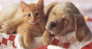 Il traffico illegale di cani e gatti, cuccioli dall'Est pagati 50 euro e rivenduti a 1000