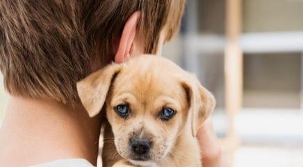 Pet Therapy: gli amici a 4 zampe entrano nelle strutture sanitarie