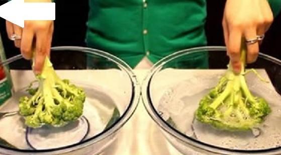 Il potere dei broccoli contro i tumori