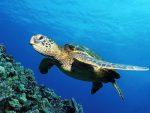Giornata delle tartarughe marine