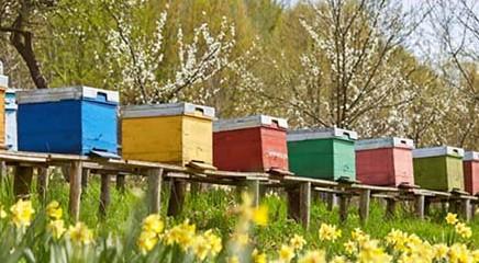 Le api non fanno più miele per il troppo caldo