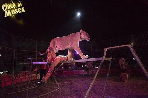 Circo di Mosca