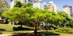 Quanto vale un albero in una megalopoli? 500 milioni di dollari!