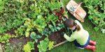 Mese di settembre: semina, raccolto e lavori nell'orto