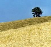 Terreni da coltivare. Il ministero mette in vendita ottomila ettari. Martina: «Con le risorse aiuti ai giovani agricoltori»
