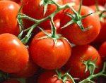 Pomodoro biologico. In due anni raddoppiata la produzione al Nord Italia