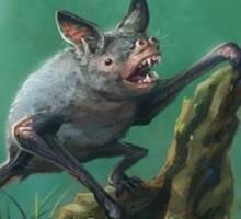 Scoperti in Nuova Zelanda i resti fossili di antichi pipistrelli giganti