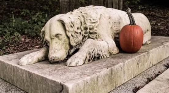 Una cuccia per sempre: via libera in Veneto ai cimiteri per cani e gatti