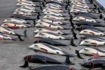 Strage di balene nell'Oceano antartico