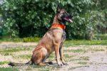 I cani sanno rilevare le malattie degli albericon il fiuto
