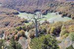 Cosa possiamo imparare da Italicus, l'albero più antico d'Europa (della sua specie)