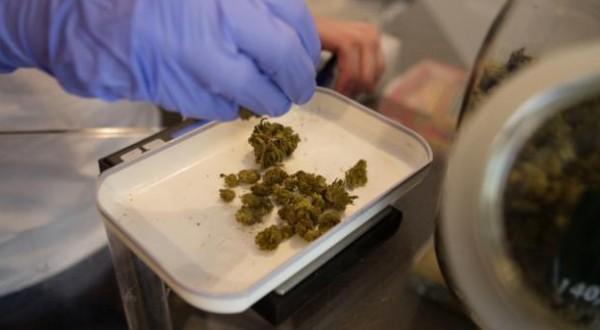 Cannabis terapeutica, la svolta: prescrivibile per ogni tipo di dolore
