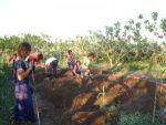 Giovani agricoltori. Il nuovo bando da 34 milioni della Regione Emilia Romagna