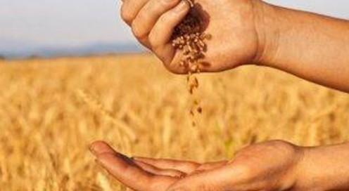 Innovare l'agricoltura rigenerando il territorio: il progetto Arca