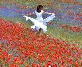 Castelluccio di Norcia, la fioritura delle lenticchie è un quadro impressionista