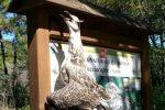 Gabbiano reale morto trovato inchiodato al cartello della riserva Lipu