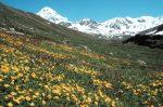 Alpi Apuane ecosistema delicato e a rischio