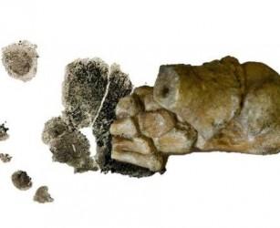 Scoperto il più antico piede di bambino: ha 3 milioni di anni e rivela che già camminavamo