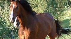 Fiera Mediterranea del Cavallo evento che non ha precedenti nell'Italia meridionale