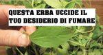 Stevia: la pianta che aiuta a smettere di fumare