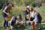 La nuova tendenza è il Gastronomic trekking