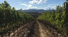 Natura del vino. Se ne parla l'8 e 9 novembre a Merano WineFestival