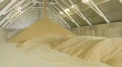 Difficoltà settore zucchero. Centinaio preoccupato per il futuro del comparto e della produzione in Italia