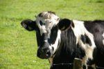 Emilia Romagna. Psr, trovare risorse per finanziare progetti filiera su latte e formaggi