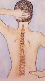 """Quando si dice: """"avere spina dorsale"""""""