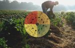Per i genetisti Agrari l'agricoltura biodinamica si fonda solo su credenze