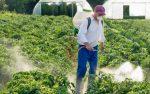 Pesticidi: Ue detta le regole sul verderame
