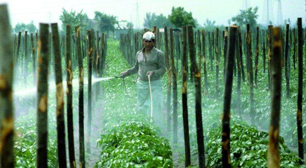 nuova regolamentazione per il sistema dell'industria alimentare
