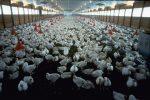 Il costo della carne sull'ambiente e'….