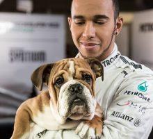 Hamilton ricorda la tanta crudeltà sugli animali