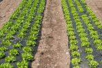 Nuova ricerca per determinare l'utilizzo di eventuali sostanze non ammesse in agricoltura biologica