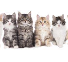 Vivere con un gatto fa bene alla salute: ecco 5 motivi