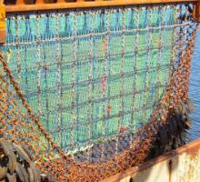La pesca a impulsi elettrici sarà totalmente vietata ai pescherecci dell'UE