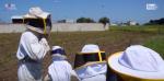 """A passeggio tra 200 mila api: tute """"spaziali"""" e coraggio per superare la paura"""