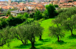Laboratori universitari ed esperti fitosanitari al capezzale delle piante di olivo del Veneto