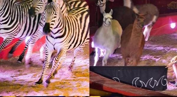 Fantastico e travolgente, è lo show del Maya Orfei Circo Madagascar