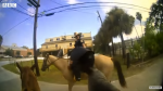 Bodycam sheds new light on horseback rope arrest – BBC News