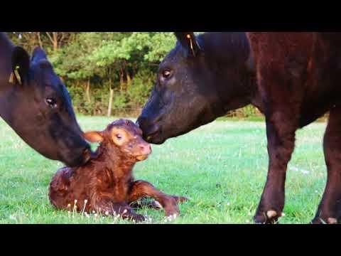 """Campagna """"Programma di Sviluppo Rurale Nazionale (PSRN) 2014-2020"""" (video sulla misura 10.2)"""