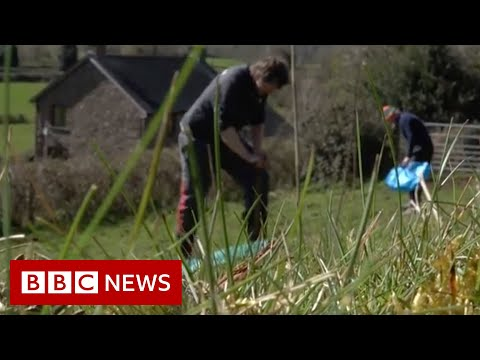 Trees planted by hospital treating Covid patients – BBC News