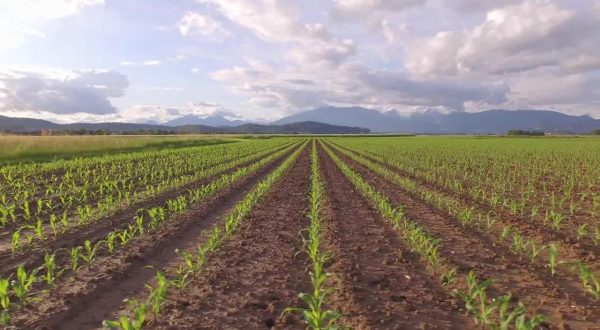 Il mercato dell'agricoltura 4.0 vale 540 mln